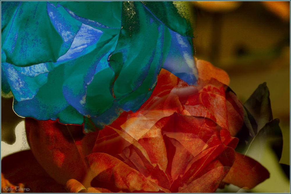 ורד א1ע by ruthytalmor