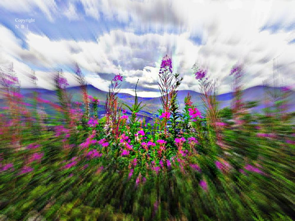 flowers on the hill  by Nedbuckleyphotography
