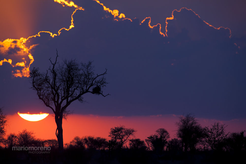 Sunset in Kruger by mariomoreno
