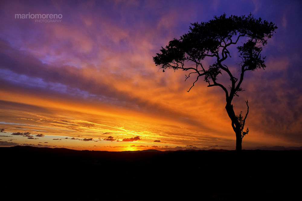 New Day in Kruger by mariomoreno