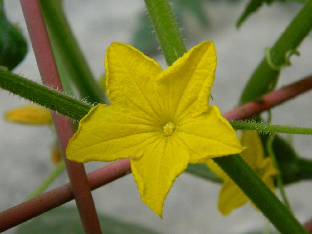 yellow 3 by Okan Turan