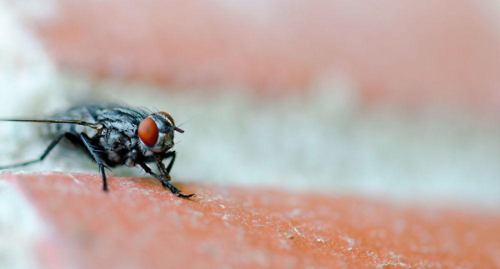 mosca by josepmariacollstrullen