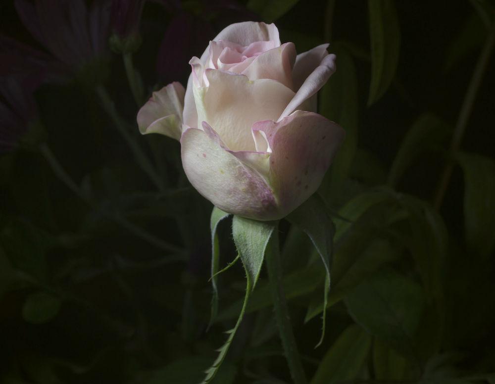 ros_1 by josepmariacollstrullen