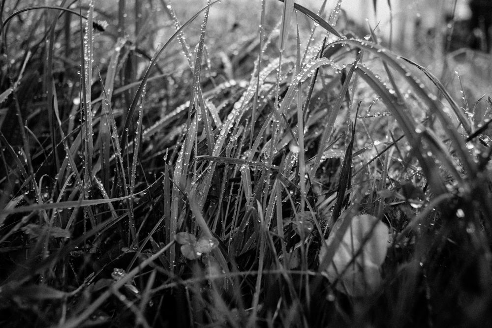 Photo in Black and White #grass