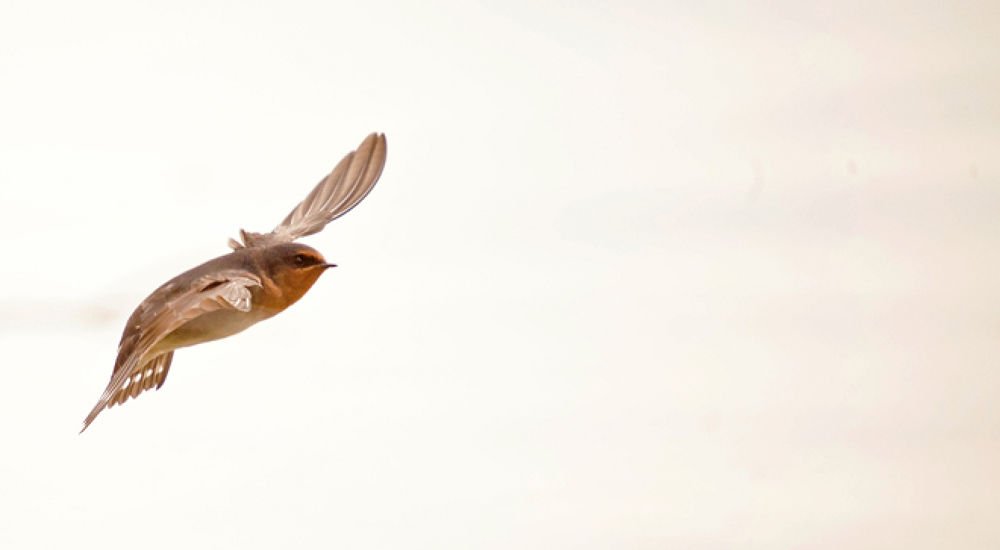 In Flight 02 by blackstallionphotography