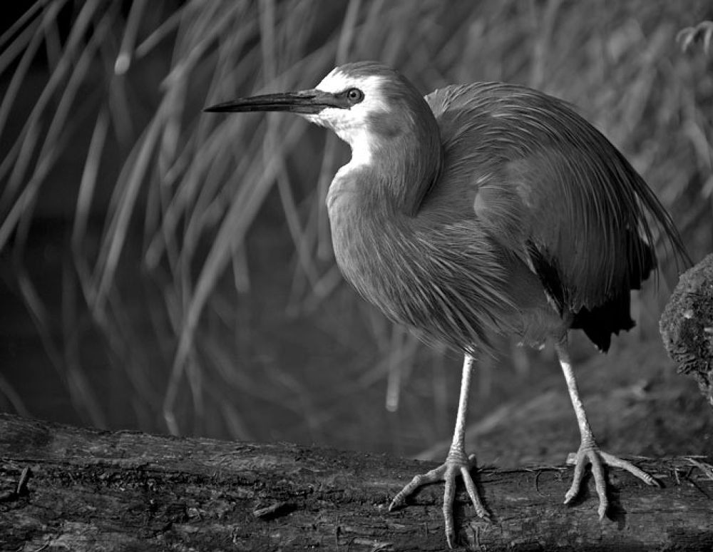 Auckland Zoo 04 by blackstallionphotography