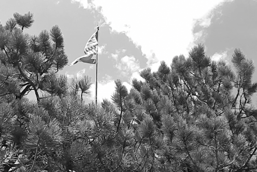 Photo in Black and White #blackandwhite #flag #patriotism