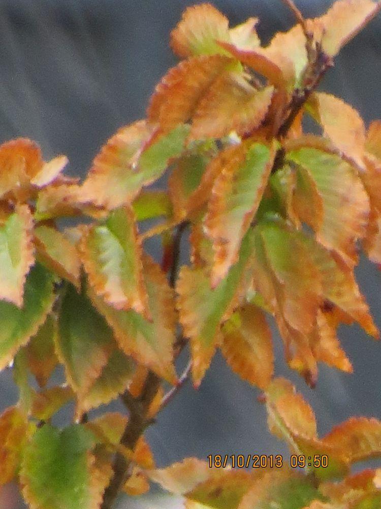 Farewell to autumn by Alicja