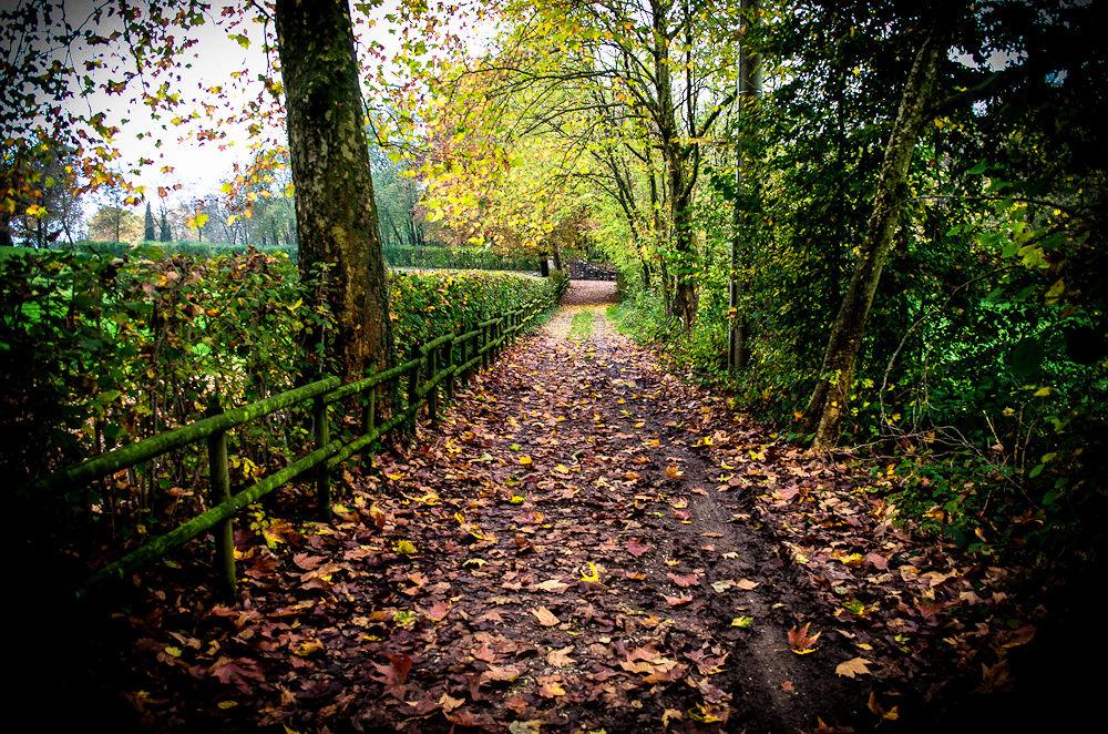 Avenue autumn by LuGiais