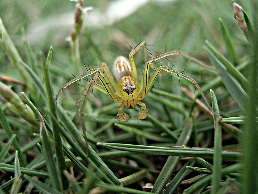 spider small by suhartono