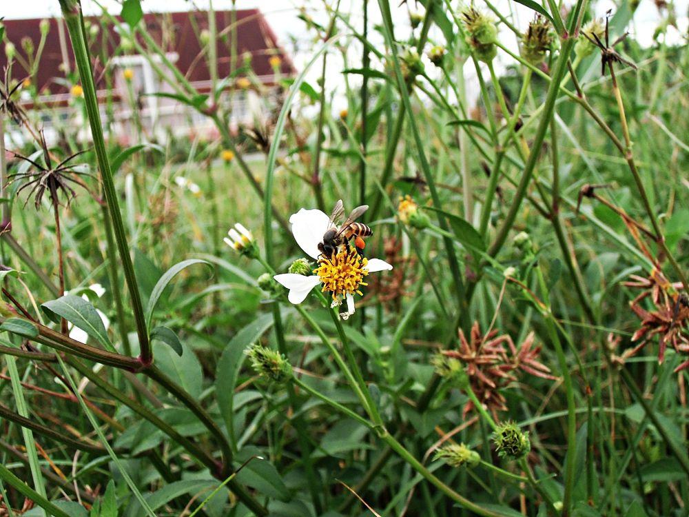 Bee by suhartono