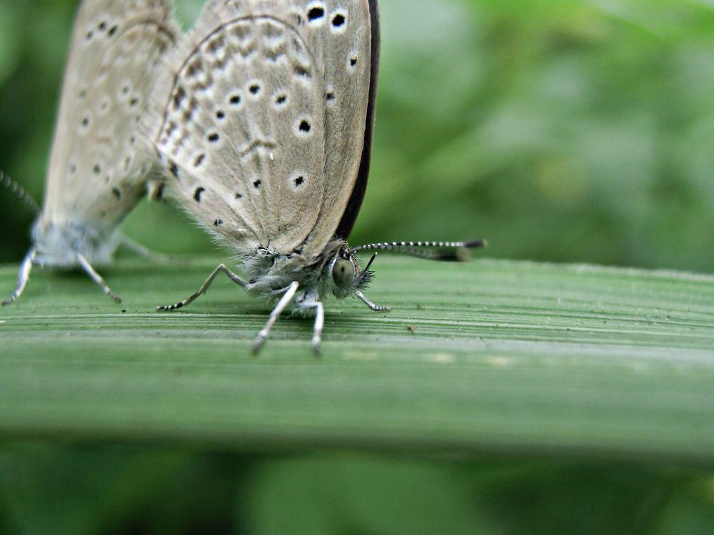 Butterfly by suhartono