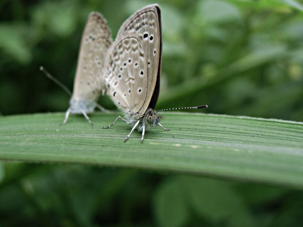 Two Butterfly by suhartono