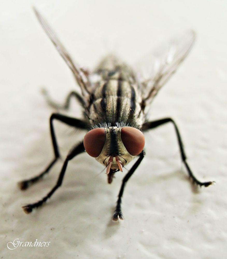 Fly.C by suhartono