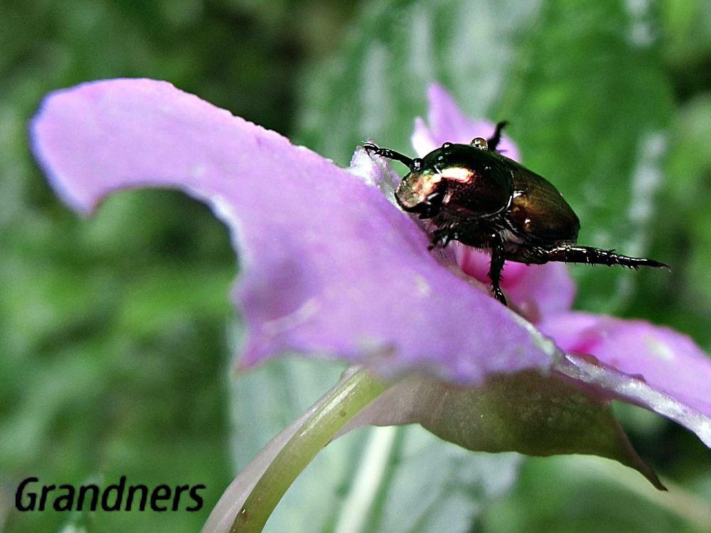 Ladybugs Rain by suhartono