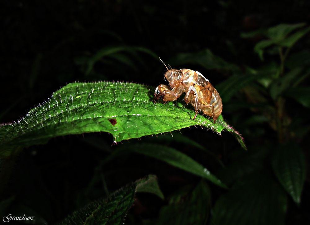 Ladybugs Epidermis by suhartono