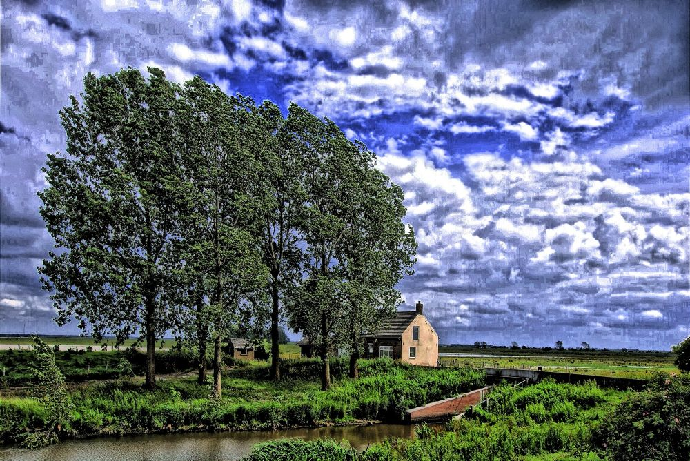 The trees and the house by cathyminnebo7