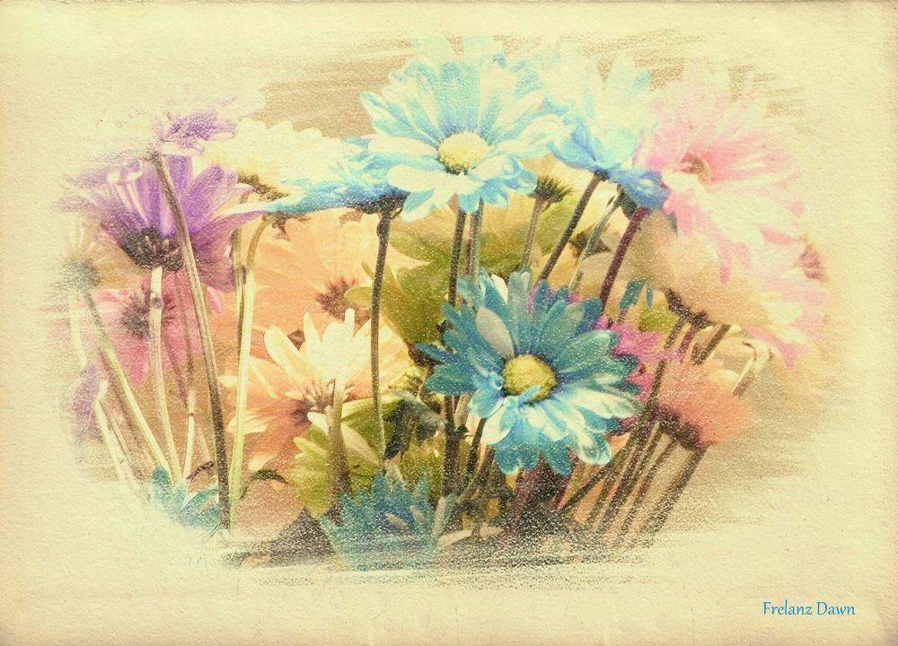 Colored Daisies by DawnMarie