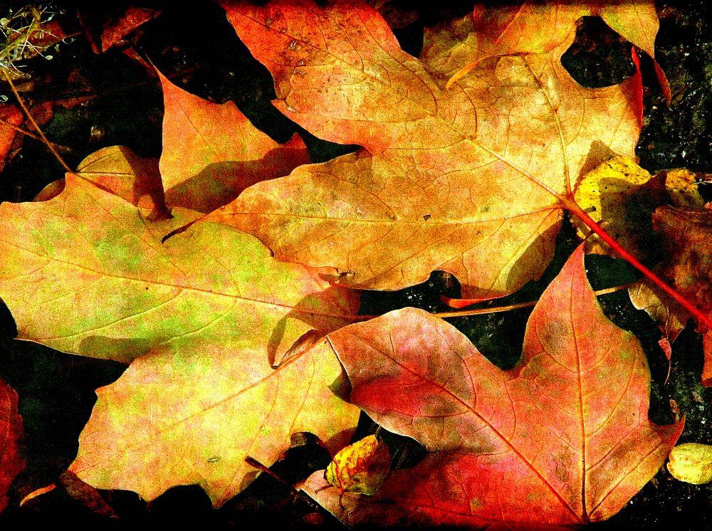 Autumn Hues by DawnMarie