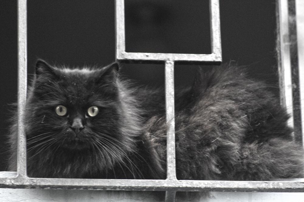 Cat in Jail.... by fotoroberto