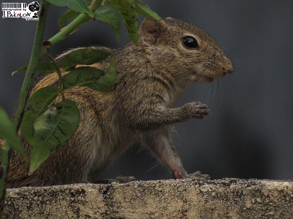 Photo in Animal #wildlife #animal #squirrel