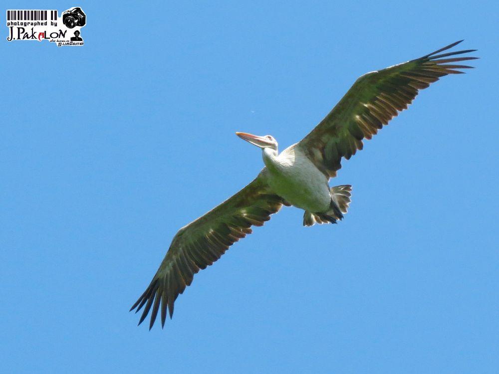 Birds by PakalonPhotography