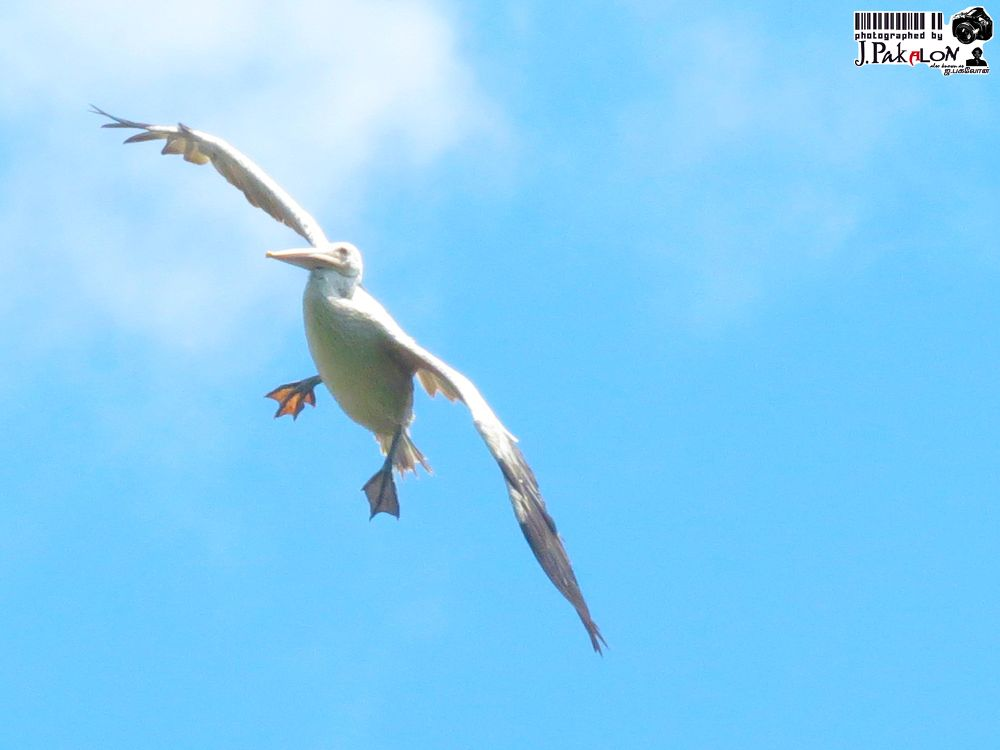 Photo in Nature #flying #bird