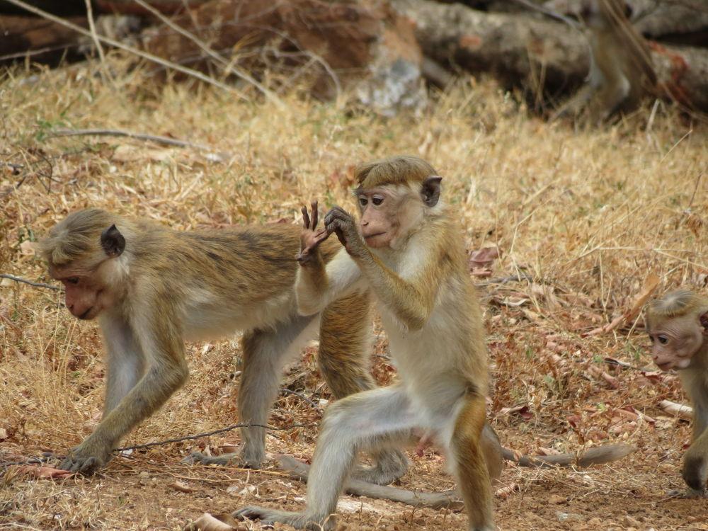 Monkey by PakalonPhotography