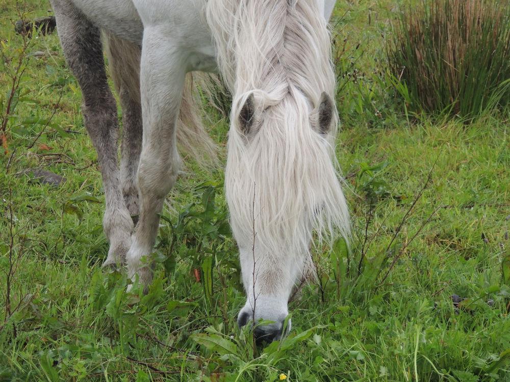 Irish pony by verok33