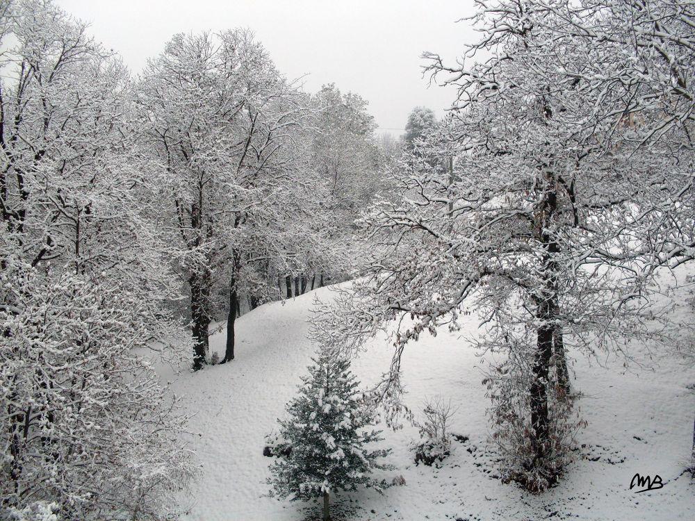 nevicata..... by marisaboschetto