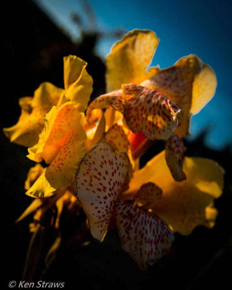 Flowers by Ken Straws
