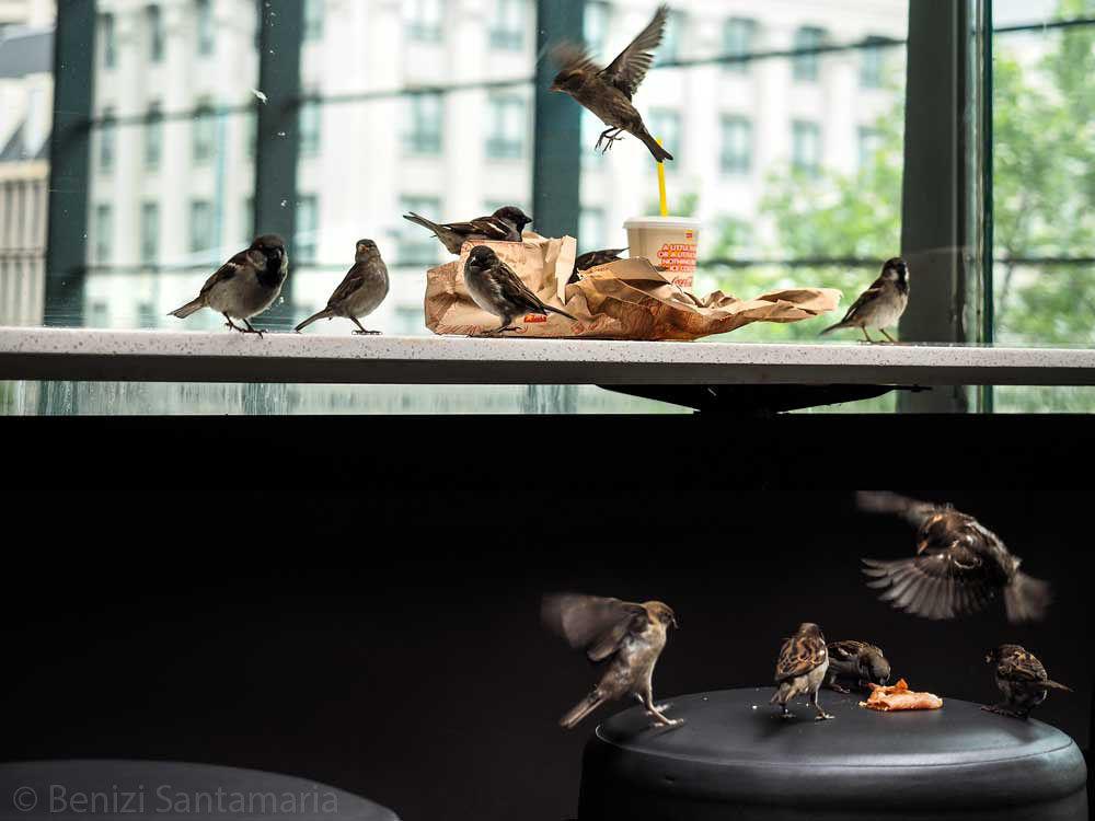 A flying visit at breakfast. by Benizi Santamaria