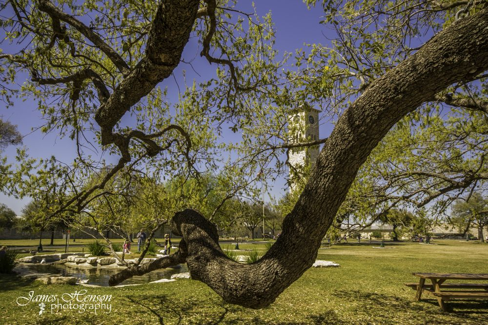 Photo in Random #ypa2013 #trees #limbs #outdoors #nature #landscape #color #frame