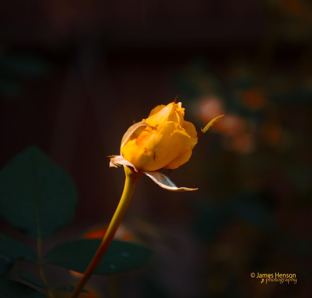 A Wee Bit of Yellow by James Henson
