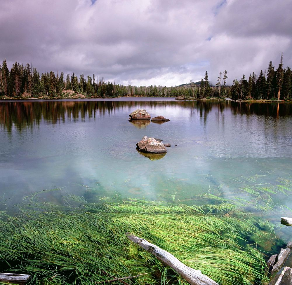 Betsy Lake Transition by raymond marlow