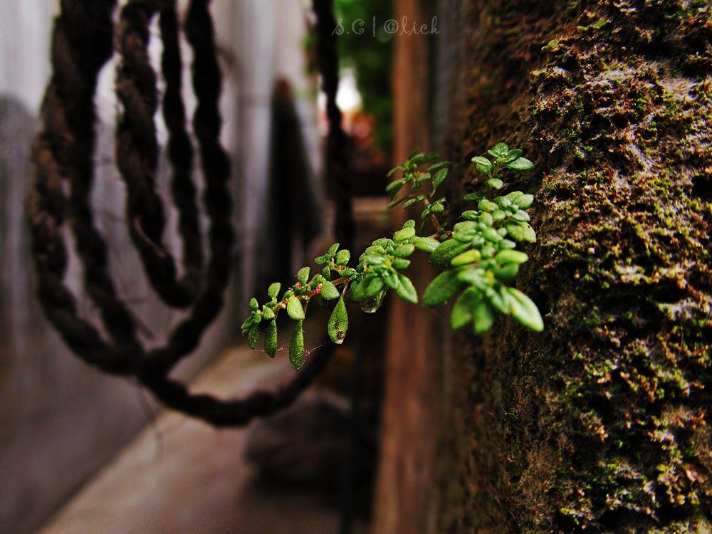 Life by Soham Chatterjee