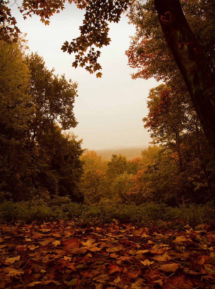 teufelsberg herbst by composio