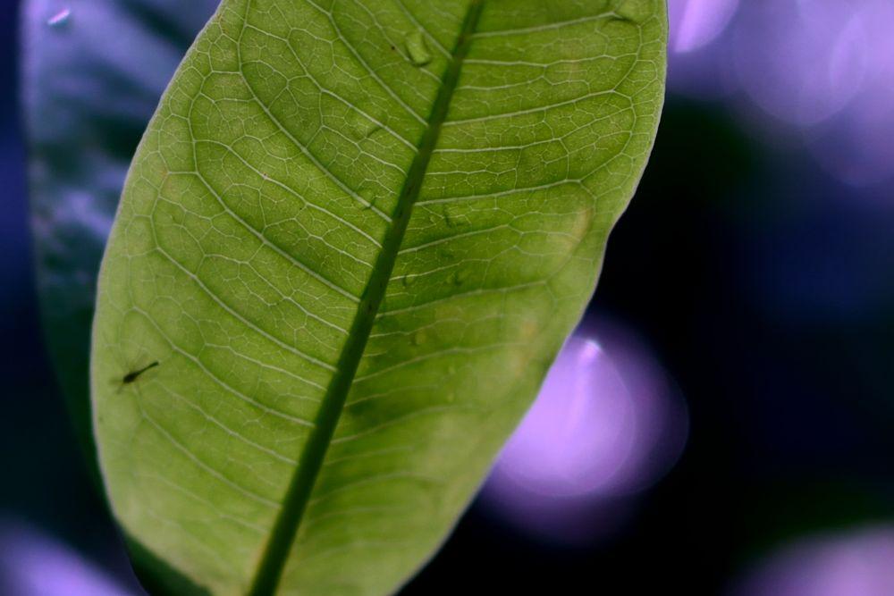 Behind A Leaf by Yulius