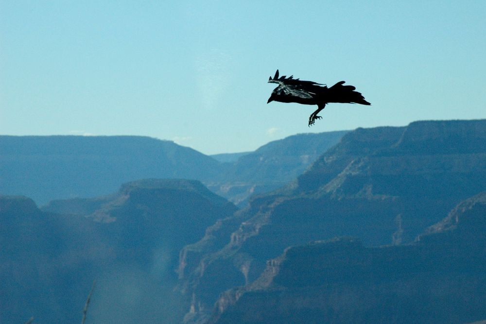 Prepare for Landing by Yulius B Susilo