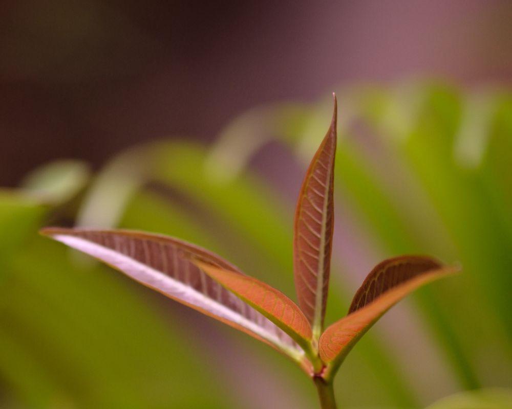 Hoping To Grow by Yulius B Susilo