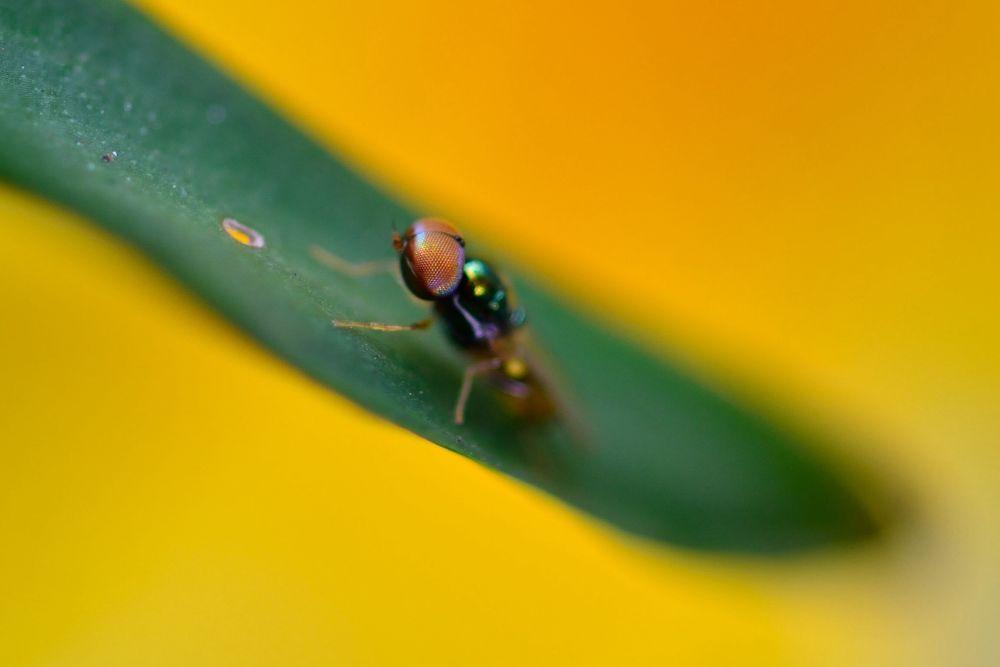 Tiny Flies by Yulius