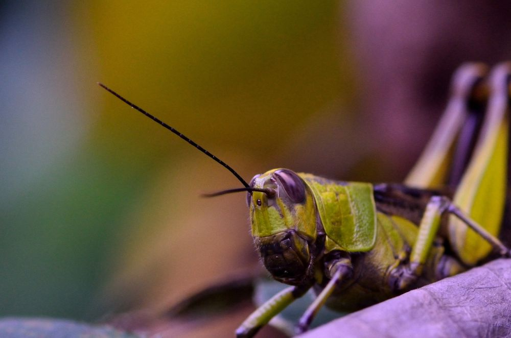 Yellow Fellow by Yulius B Susilo