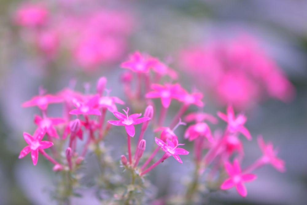Pinkish by Yulius
