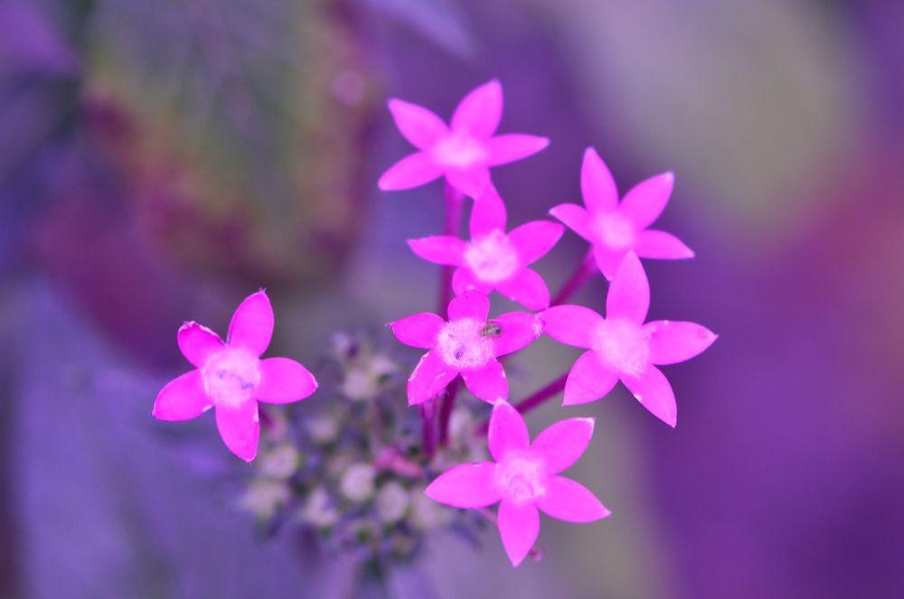 Pink by Yulius