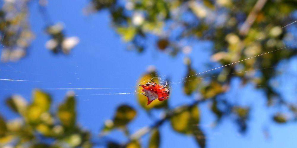 DSCN1262 spider's sun bath  by pawel2reklewski