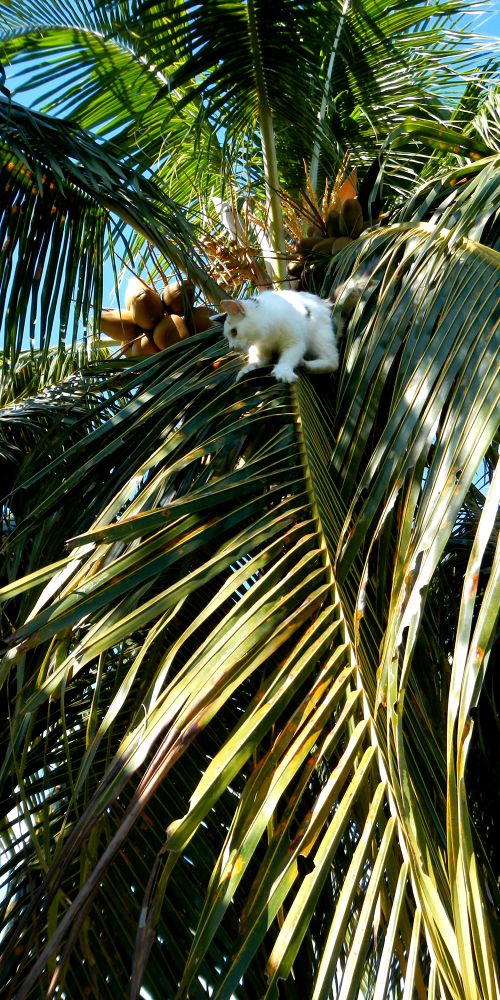 DSCN1272 my cat in the cocotier  by pawel2reklewski