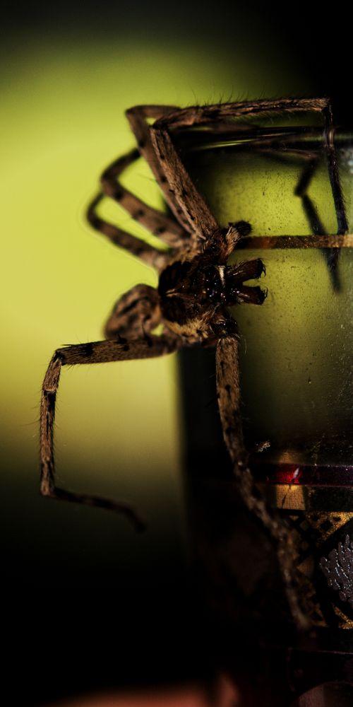 DSC_7402  rec 12  spider  by pawel2reklewski