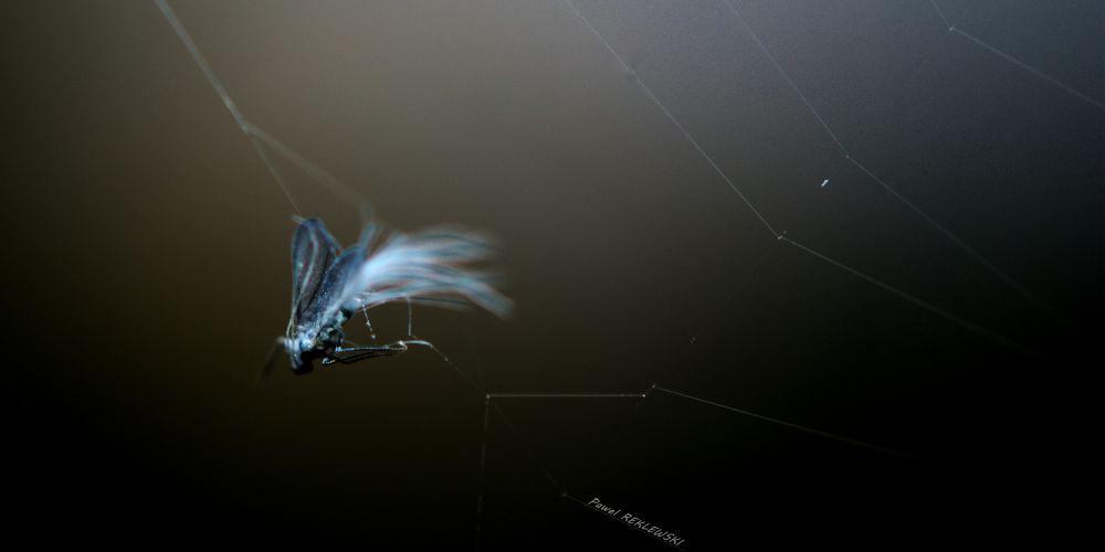 DSC_7640 pr the web... by pawel2reklewski