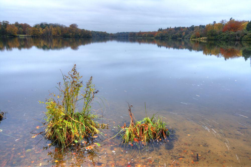 Photo in Landscape #water #lake #virginia water #berkshire