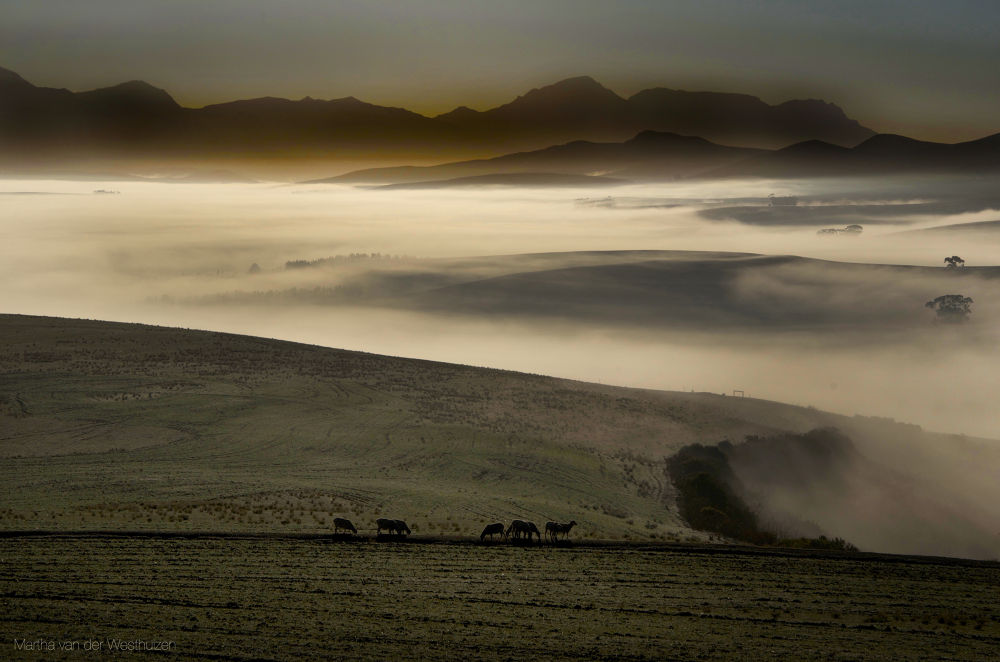 Photo in Landscape #sunrise #valley #meadow #sheep #grazing #mist #mountains